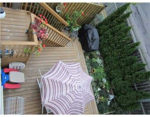 Back Yard / Deck